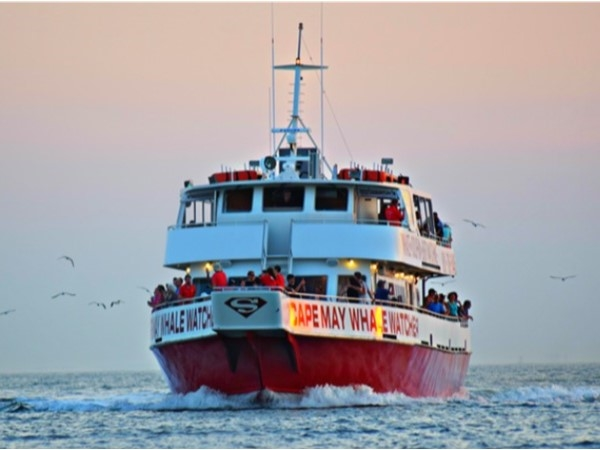 Enjoy a trip on the Cape May Whale Watcher