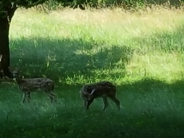 A couple of new friends I met today showing homes in wonderful and rural Deerfield Township