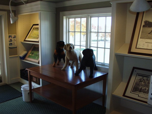 Three dogs at Valley Brook Golf Club