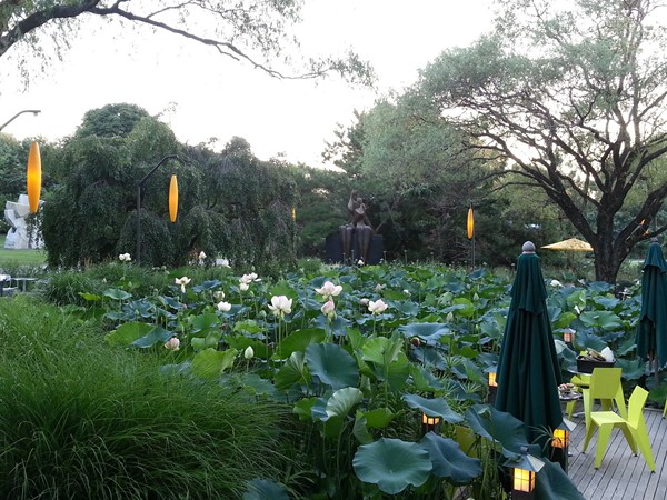 Lotus, the symbol of purity, is featured here at Grounds for Sculpture