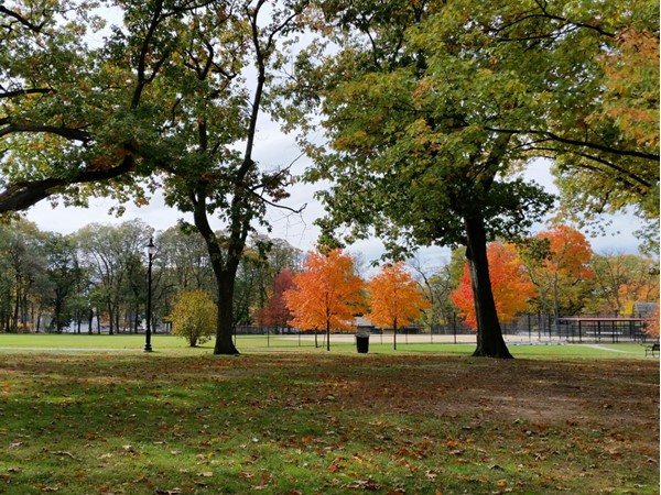 Scenic fall views in Nutley Park