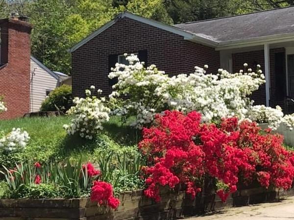 Beautiful flowers on Front Street