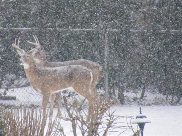 Beautiful visitors in my backyard