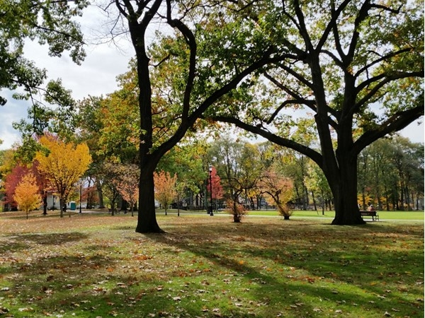 Scenic autumn views in Nutley Park