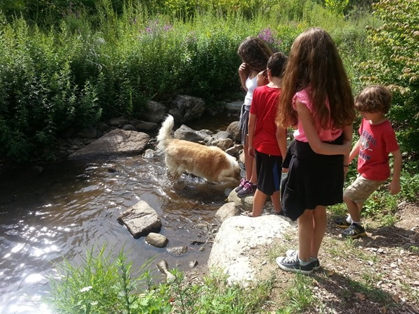 Happy children and dog playing in the stream after hiking Sparta Glen Park