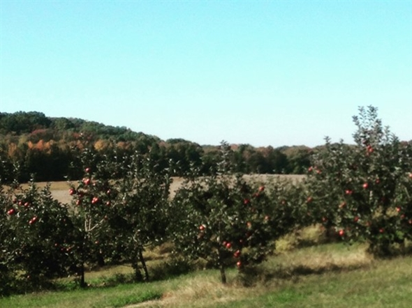 Beautiful Battleview Orchards