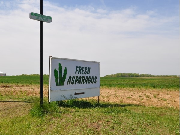 Fresh Asparagus available at Katona Farm