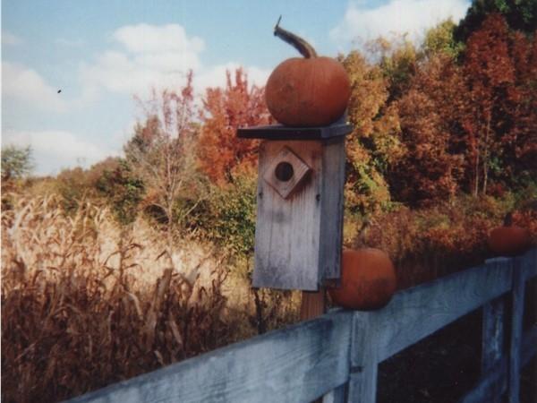 Bird house at Pumpkin time overlooking Ort's Farm