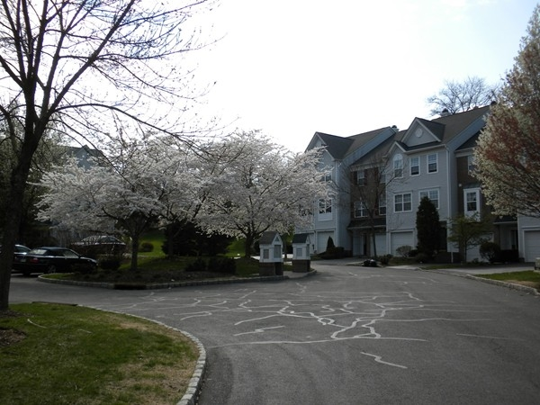 Breathtakingly beautiful flowering spring trees are located throughout the Hamilton Woods community