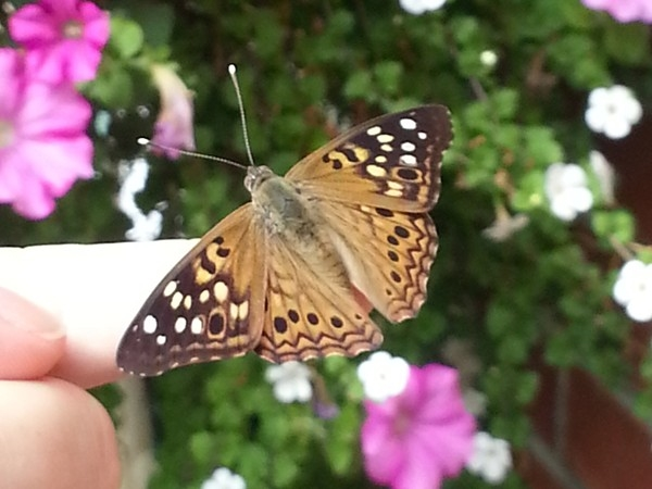 A throwback photo of a springtime butterfly