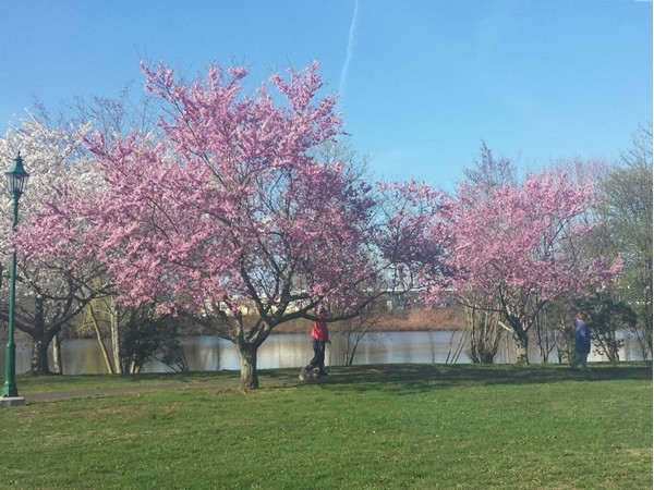 Lovely flowering trees along path at Franklin Lake Park