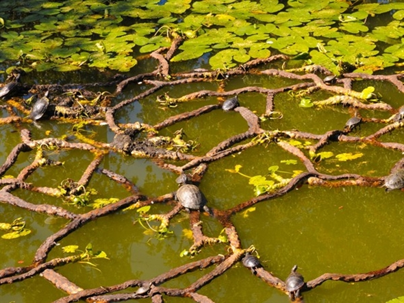 Turtles relax on tree branches in Divine Park