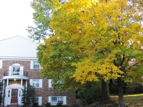 Fall in Morristown