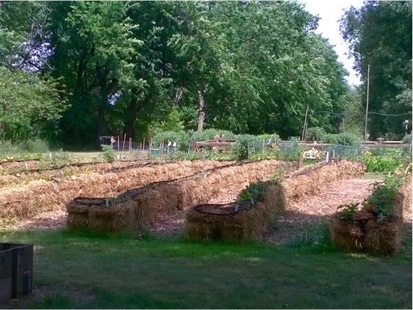 Community garden on Passaic Avenue