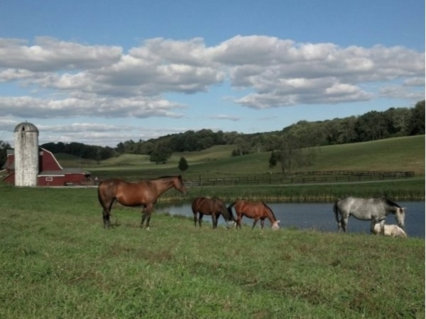 Beautul horse farm and view of mountains near Fredon Township