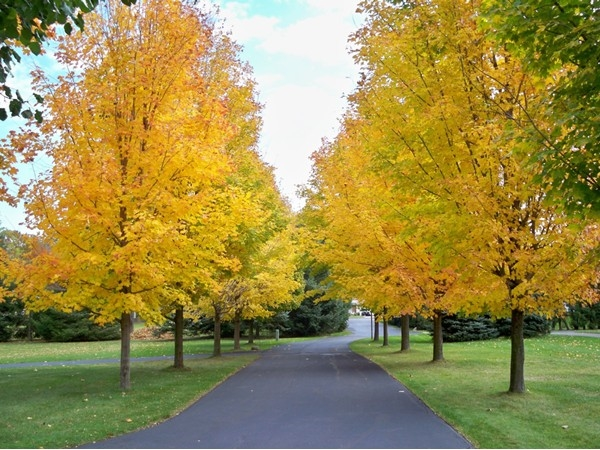 Fall foilage in the Graham Creek Heights Subdivision