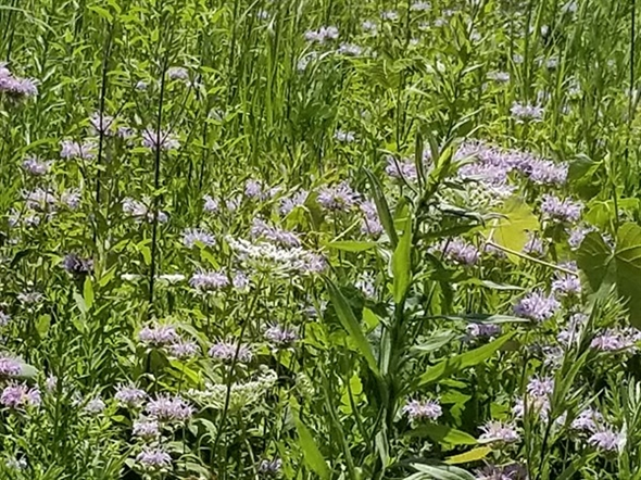 Summer wildflowers and colorful fields at Bashakill Wildlife Management Preserve
