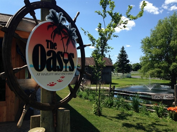 The Oasis outdoor lounge at Hazlitt Vineyard - famous for their Red Cat brand wine