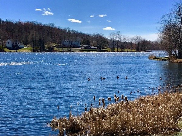 Beautiful spring day on Beaver Dam Lake. The ducks are out and about