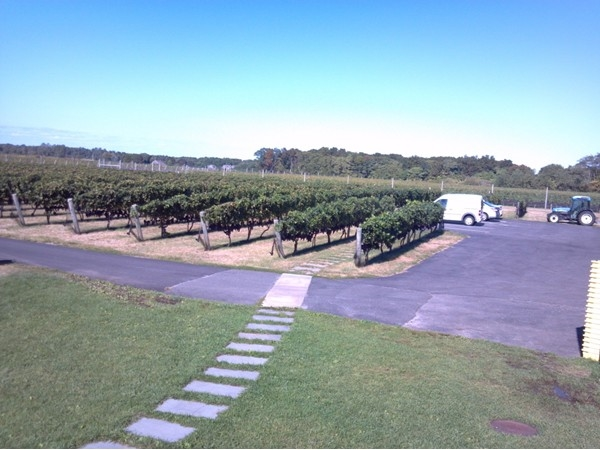 Always a great time at one of the many wineries on the North Fork