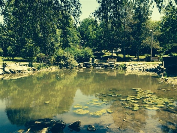 Glen Park in the heart of Williamsville. What a perfect place for a walk after lunch on Main Street