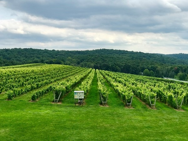 View from the terrace...a relaxing and peaceful place to sit back and enjoy your favorite wine
