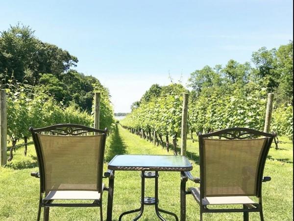 Come relax at Harmony Vineyards at Head of the Harbor, NY