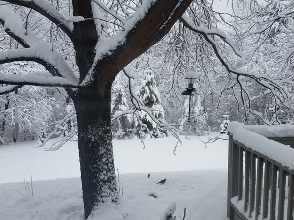 Second nor'easter. Birds are happy with a feeder