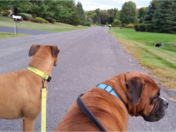 Roxy and Diesel checking out Budd Lane