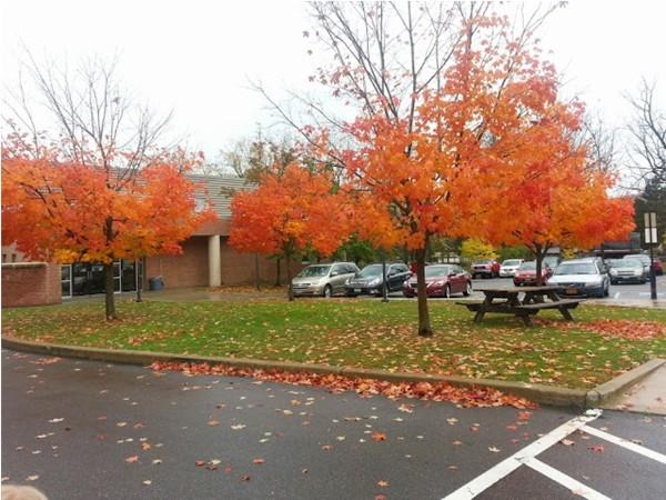 Pine City School