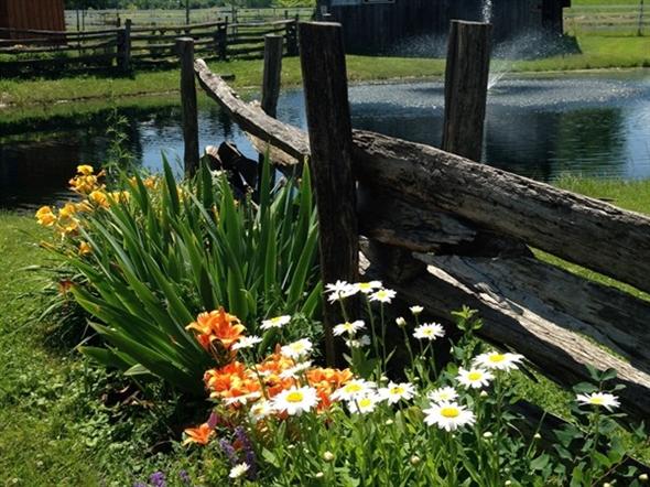 The view at Hazlitt Vineyard - The outdoor Oasis