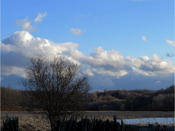 Wetlands of Irondequoit Bay abounds with wildlife. View looking south from Empire Boulevard
