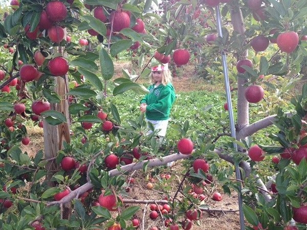 Applefest in Warwick