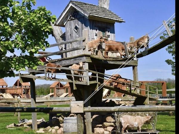 Harbes Family Farm Barnyard adventure season