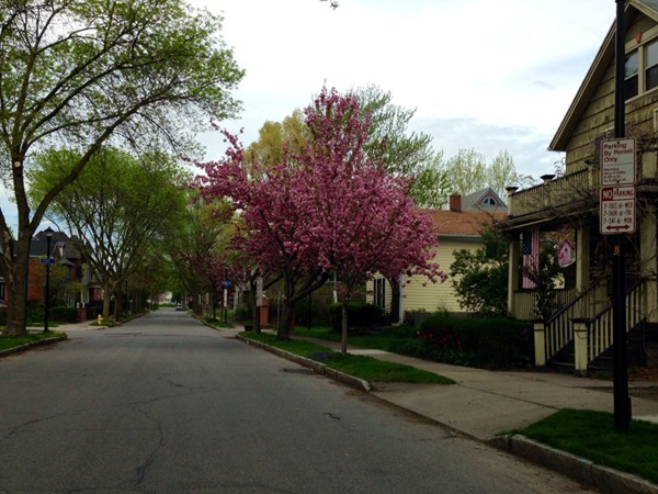 Atkinson Street in Corn Hill is a tree lined street with beautiful homes