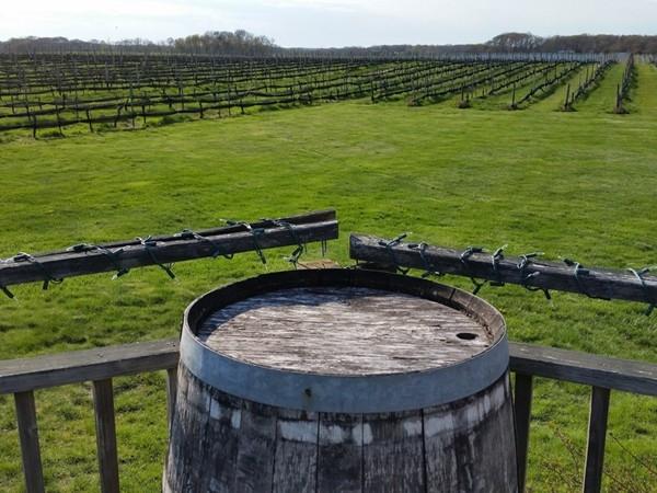 A local vineyard