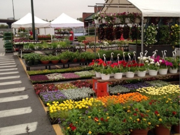 Regional Farmer's Market in Syracuse is a harbinger of spring.  Great op to get plants for garden