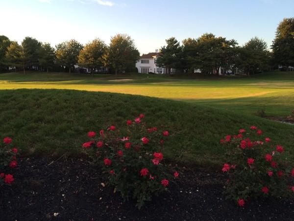 I love my neighborhood.  A beautiful walk around the golf course