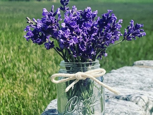 Lavender bouquet from Lavender by the Bay