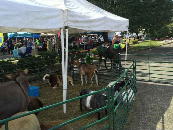The all important Petting Zoo