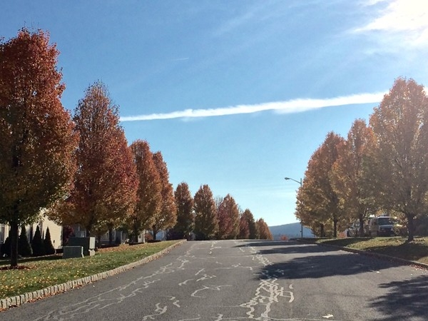 Pretty tree lined street in Brigadoon