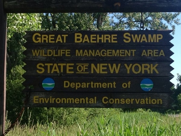 The Great Baehre Swamp. One of nature's phenomenal displays in Amherst