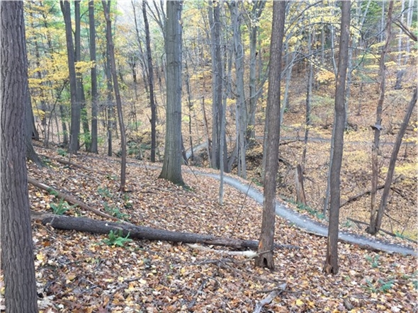 Our area offers an abundance of parks and trails.There is nothing quite like Indian summer hikes