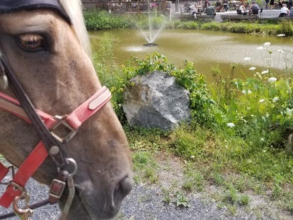 Horse friendly Bashakill Vineyards