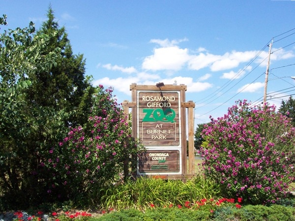 Syracuse has a great zoo. Adults and kids alike will enjoy what this zoo has to offer