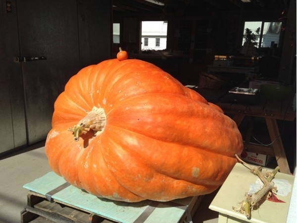 Huge pumpkin displayed at Henry's Farm Stand on Rte 5 in Chittenango