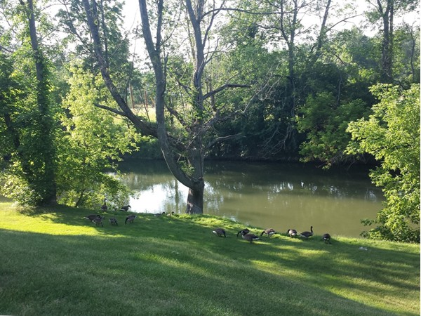 Beacon Park Condos back up to Ellicott Creek.  Easy access to water for  kayaking or canoeing