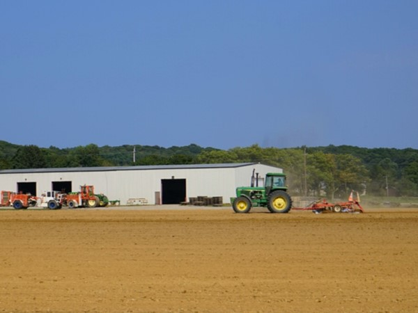 The local farms in Riverhead