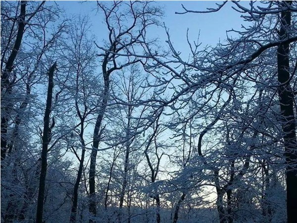 Winter on West Hill