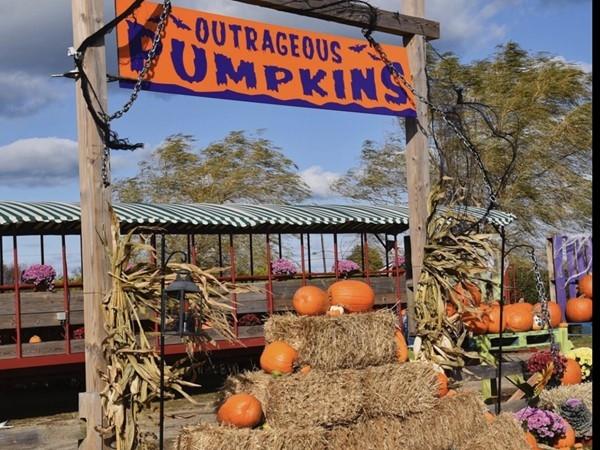 Harbes Family Farm pumpkins